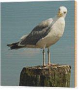 Boston Bay Birdy Wood Print