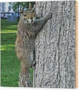 Boston Common Squirrel Hanging From A Tree Boston Ma Wood Print
