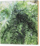 Boston Fern With Visitor Wood Print