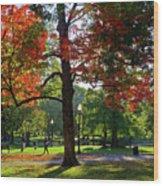 Boston Public Garden Autumn Tree Morning Light Walk In The Park Wood Print