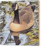 Boston Public Garden Goose Wood Print