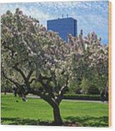 Boston Public Garden Spring Tree Boston Ma Wood Print