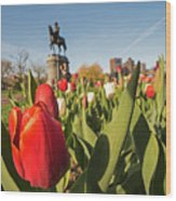 Boston Public Garden Tulips And George Washington Statue 2 Wood Print