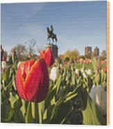 Boston Public Garden Tulips And George Washington Statue Wood Print