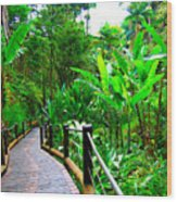 Botanic Gardens Trail Wood Print
