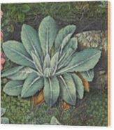 Botanical Wood Print