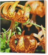 Botanical Art Prints Orange Tiger Lilies Master Gardener Baslee Troutman Wood Print