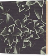Botanical Blooms In Darkness Wood Print