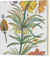 Botanical Flower-53  Yellow Flower Wood Print
