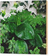Botanical Garden With White Flowers Wood Print