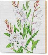 Botanical Illustration Floral Painting Wood Print