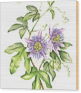 Botanical Illustration Passion Flower Wood Print