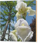 Botanical Landscape Trees Blue Sky White Irises Iris Flowers Wood Print