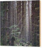 Botanical Reincarnation Wood Print