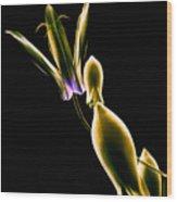 Botanical Study 1 Wood Print