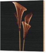 Botanical Study 5 Wood Print