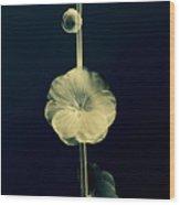 Botanical Study 6 Wood Print