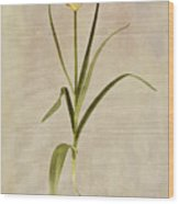 Botanical Tulip 2 Wood Print