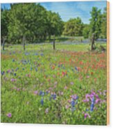 Botanical Variety Show In The Texas Hill Country Wood Print