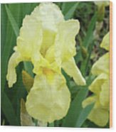 Botanical Yellow Iris Flower Summer Floral Art Baslee Troutman Wood Print