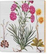 Botany: Flowers, 1613 Wood Print
