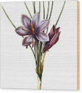 Botany: Saffron Wood Print