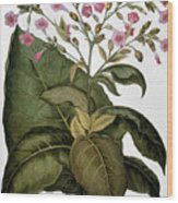 Botany: Tobacco Plant Wood Print