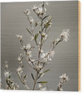 Botswana Wildflower  Wood Print