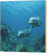Bottlenose Dolphins And Coral Reef Wood Print