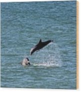 Bottlenose Dolphins In The Ocean Wood Print