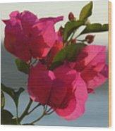 Bougainvilla Wood Print