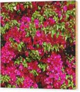 Bougainvillea And Foliage Wood Print