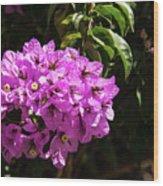 Bougainvillea Bloom Wood Print