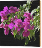 Bougainvillea Cutout Wood Print