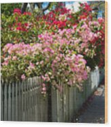 Bougainvillea In Old Eau Gallie Florida Wood Print