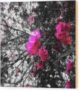 Bougainvillea Invasion Wood Print