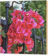 Bougainvillea On Southern Fence Wood Print