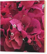 Bougainvillia Wood Print