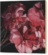 Bouganvilla Wood Print
