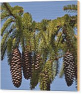 Boughs Of Pine Cones Wood Print