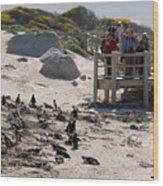 Boulders Beach Penguins Wood Print