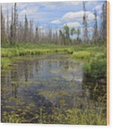 Boundary Waters Beauty Wood Print