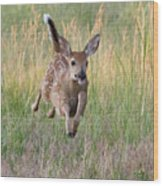 Bounding Bambi Wood Print