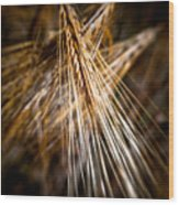 Bounty Of Barley Wood Print