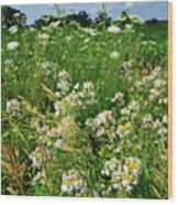 Bouquet Of Wildflowers Along Country Road In Mchenry County Wood Print