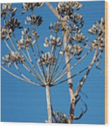 Bouquets Of Seeds Wood Print
