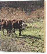 Bovine Pastures Wood Print by B Rossitto
