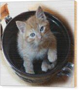 Bowlful Of Kitten Wood Print
