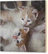 Box Full Of Kittens Wood Print