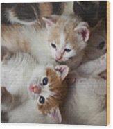 Box Full Of Kittens Wood Print by Garry Gay